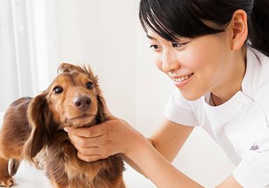 動物 看護 師 一般社団法人 日本動物看護職協会